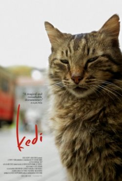 KEDI (GATOS DE ESTAMBÚL)